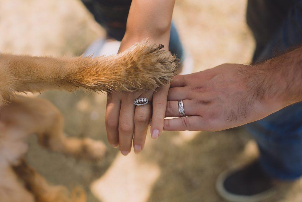 Scheiding huisdieren